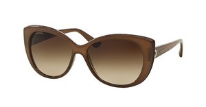 Bvlgari BV8157BQ 111113 BROWN GRADIENTTURTLEDOVE